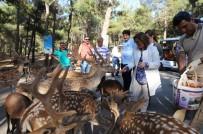 KAMERUN - Hayvanat Bahçesi, Kadınlar Ve Çocuklara Ücretsiz Olacak