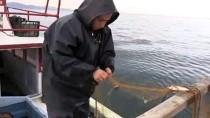 Karadeniz'in Kadın Balıkçılarının Zorlu Mesaisi