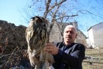 MEHMET ÇALıŞKAN - Yaralı Olarak Bulunan Puhu Kuşu Tedavi Altına Alındı