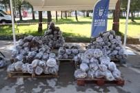 Büyükşehir'den Üreticiye 31 Bin Ahududu Fidanı