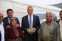 SOĞUK HAVA DEPOSU - Erik Hasadı Yapan Çiftçiye Başkan Tarhan'dan Destek Ziyareti
