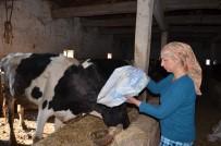 Kadınlar Günü'nde Hayvanları Yemleyip Süt Sağdı