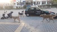 ERMENEK - Mut'ta Başıboş Köpekler Korku Saçıyor