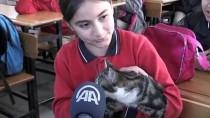 SOKAK KEDİSİ - Sokak Kedileri Okulun Maskotu Oldu