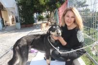 BAKIM MERKEZİ - Başına Geçirdiği Plastik Bidon Sebebiyle Aç Susuz Bitkin Düşen Sokak Köpeği Sağlığına Kavuştu