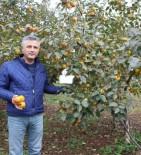 KARBONHİDRAT - Bu Meyveye İsmini Verdi Ama Üretiminde 25. Sırada