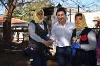 CİNSİYET EŞİTLİĞİ - CHP Adayı Aras Kadınlara Söz Verdi, İmza Attı