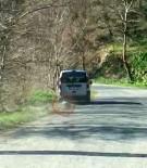 GÜMELI - Ölü Köpeği 2 Kilometre Aracının Arkasında Sürükledi