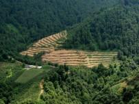 Orman Alanlarımız Arttı