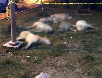 Ankara'daki katliamla ilgili gözaltı!