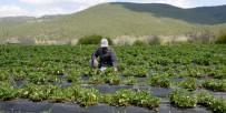 BÜYÜKŞEHİR YASASI - Büyükşehir'den Çiftçiye Fidan Ve Fide Desteği