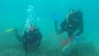BODRUM BELEDİYESİ - Gölköy'de Deniz Dibi Temizliği