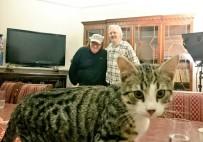 EKVADOR - Assange'ın Avukatı Açıkladı Açıklaması 'Kedi James Kurtarıldı Ve İyi'