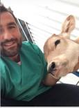 Çankırı Belediyesi'nden Buzağının Hayatını Kurtaran Operasyon