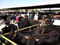 HAYVAN PAZARI - Canlı Hayvan Pazarı Şap Tehdidiyle Kapatıldı