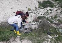 Gömülen 15 Köpek Ve 1 Kedi İçin Belediyeye İdari Ceza