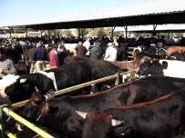HAYVAN PAZARI - Isparta Canlı Hayvan Pazarı Şap Tehdidiyle Kapatıldı