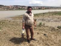 BALIK ÖLÜMÜ - Bursa'da On Binlerce Balık Kıyıya Vurdu