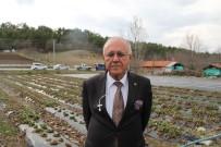 Kırsaldaki Yoksulluk, Köyden Kente Göç Çilekle Yenilecek