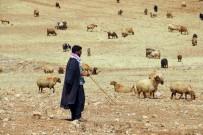 Bayburt'ta Küçükbaş Ve Büyükbaş Hayvan Yetiştiricileri Meralara Çıkmaya Hazırlanıyor