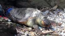 MARMARA DENIZI - Balıkesir'de Ölü Bir Caretta Caretta Sahile Vurdu