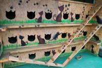 BAŞAKŞEHİR BELEDİYESİ - Başakşehir'in Kedileri 'Ev'Leniyor