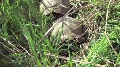 Kuyuda Mahsur Kalan Kaplumbağaları İtfaiye Kurtardı