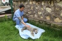 ASKERİ PERSONEL - Ölmek Üzereyken Bulunan Köpeğe Mehmetçik Şefkati