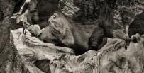 ARIZONA - Ulubey Kanyonu Ve Taşyaran Vadisi Görsel Güzelliği İle Dikkat Çekiyor