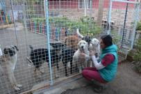 ATAKENT - Sokak Hayvanları İçin Laboratuvar