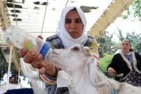 KIZ KARDEŞ - Annesi Ölen Keçiyi Bebekleri Gibi Besliyorlar
