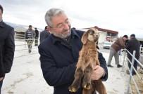 DOĞU ANADOLU - Çorum Hayvan Pazarı Açılış Saatinde Düzenleme
