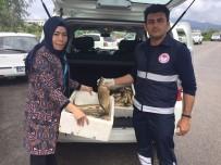 CEYHAN NEHRİ - Osmaniye'de Kaçak Avlanan Balık Ve Ağ Ele Geçirildi