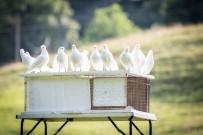 YARIŞ - Aydınlı Güvercinseverler Yarışlara Hazırlanıyor