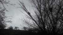 Yavru Ayı Köpeklerden Kaçarak Çıktığı Ağaçta Mahsur Kaldı, İmdadına Köylüler Yetişti