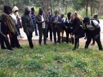 LIBERYA - TİKA, Gana-Akra Ve Liberya-Paynesville Belediyesi Çalışanlarına Park Ve Bahçecilik Eğitimi Verdi