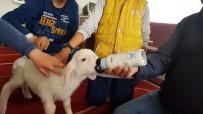Kuzuyla Alışverişe Gidiyor, Çocuk Bezi Bağlıyor