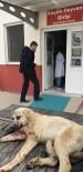 Otomobilin Çarptığı Köpeğe Zabıta Ekipleri Sahip Çıktı