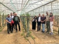 Türkiye'nin En Geç Kadın Muhtarı Ovacıklı Şilan, Antalya'da Tarım Alanlarını Gezdi