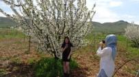 Gercüş'te Çiçek Açan Kiraz Bahçeleri Gelinliği Andırıyor