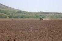Tokat'ta 200 Kilo Kenevir Tohumu Toprakla Buluştu