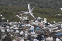 KAR SÜRPRİZİ - Kuş Sürücüleri Ve Sokak Hayvanlarının Çöplüğü Mesken Tuttu