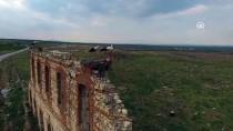 ELEKTRİK DİREĞİ - Tarihi Hastane Duvarının Kanatlı Misafirleri Geldi