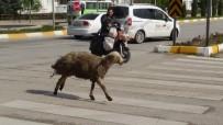 (Özel) Kaçan Koyun Ortalığı Birbirine Kattı
