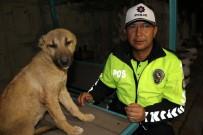 Yaralı Köpeğe Polis Sahip Çıktı