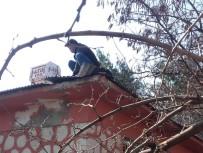 MEHMET TÜRK - Köy Okuluna 'Kardeş Okul' Dokunuşu