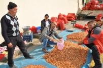 GÖKKAYA - Tohumluk Soğan Fiyatları Yükseliyor
