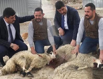 Başkan Oğuz kurbanlarını kesti 'Bismillah' deyip göreve başladı