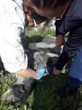 Çukura Gömülü Kedi Ve Köpek Ölüleri Bulundu
