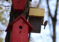 (Özel) Bu Parktaki Kuşların Yaşamları İnternet Üzerinden Gözlem Altında
